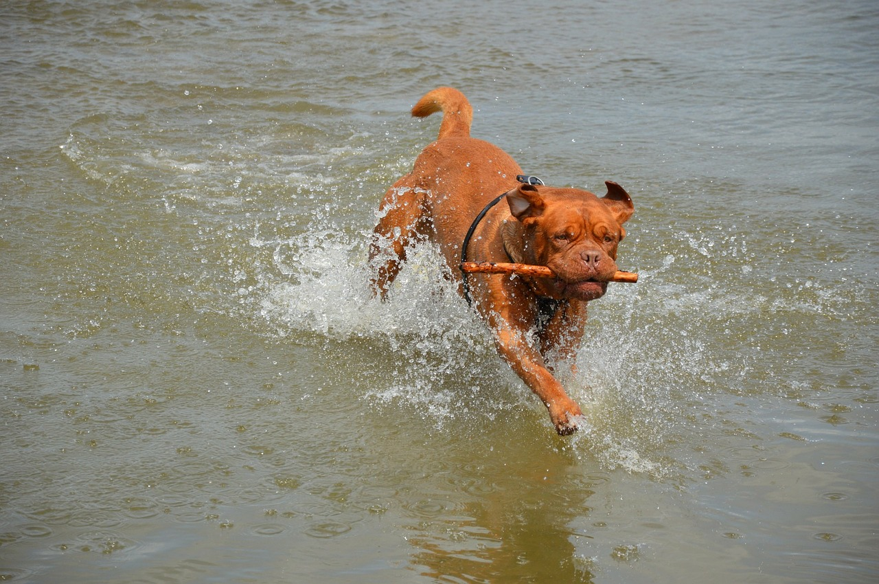 Dog Days of Summer: Keeping Pets Safe in the Heat